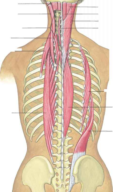 Spiral anatomy continued (again) | Ancestral Movement